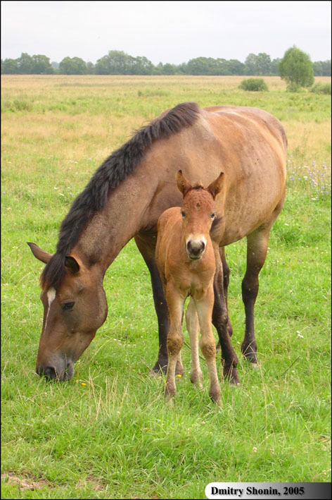 "photo ""Mother&Baby"" tags: nature, pets/farm animals"