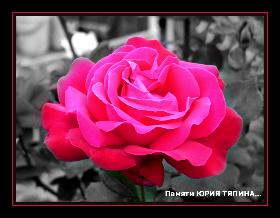"photo ""Dedicated to Yuir Tyapin..."" tags: misc.,"
