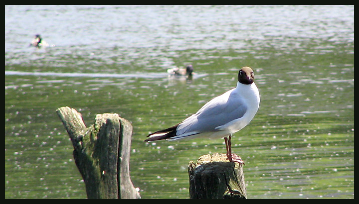 "photo ""There was a seagull..."" tags: nature, wild animals"