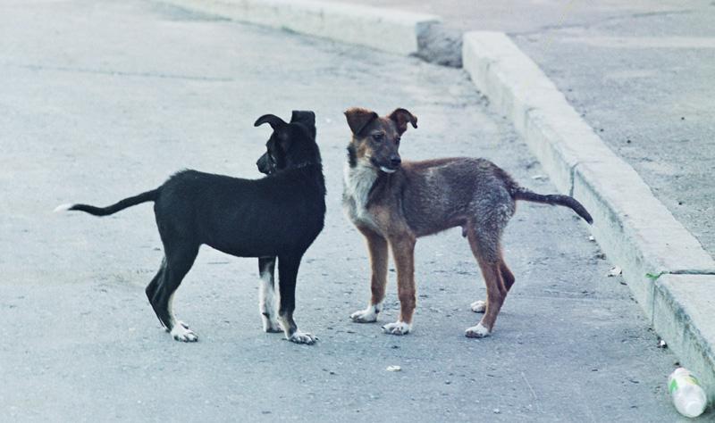"photo ""frends"" tags: nature, genre, pets/farm animals"