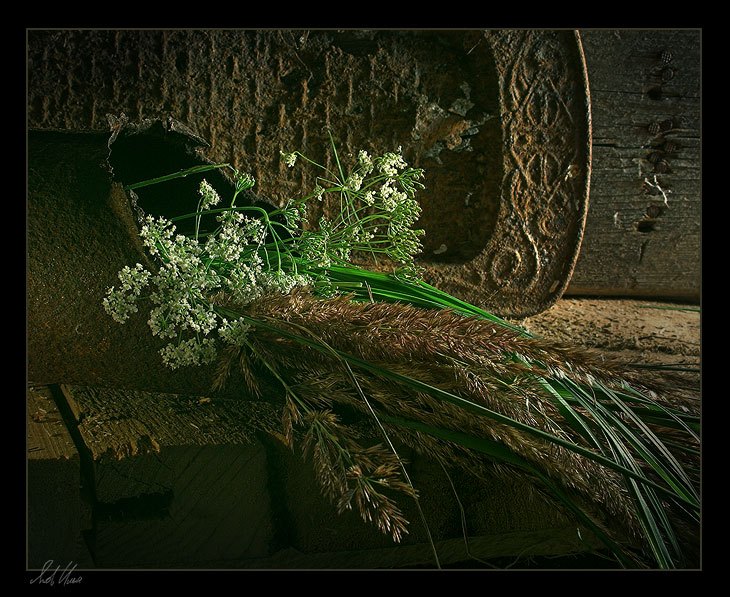 "photo ""Sad story"" tags: still life, nature, flowers"