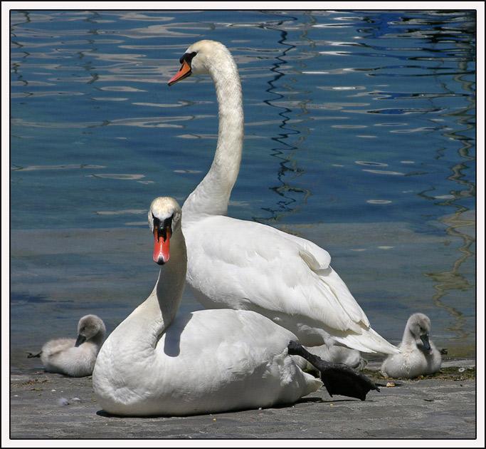 "photo ""Family"" tags: nature, pets/farm animals"