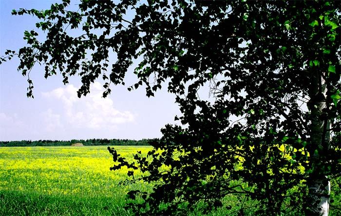 """photo """"Russian landscape"""" tags: landscape, summer"""