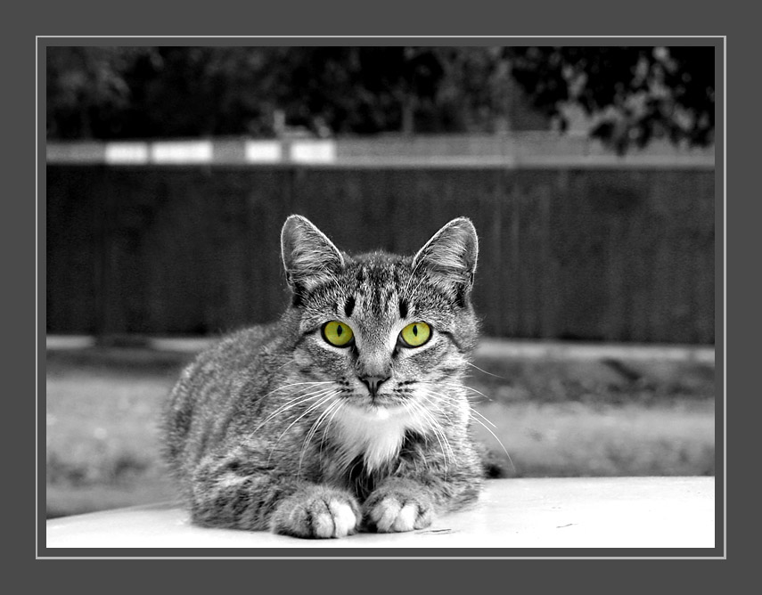 "photo ""From a clan cat's"" tags: nature, pets/farm animals"