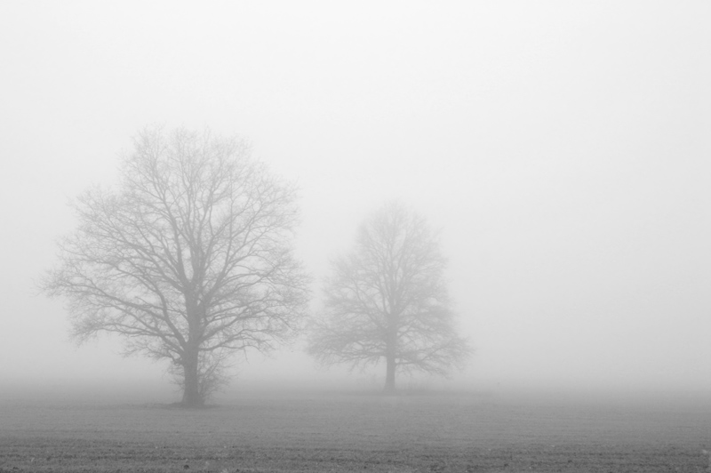 "photo ""Fog"" tags: landscape,"