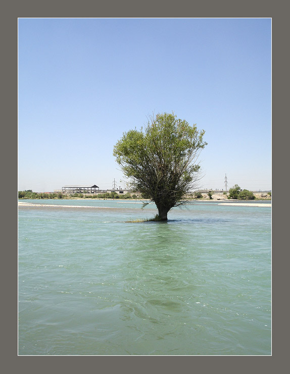 "photo ""Floating tree"" tags: nature,"