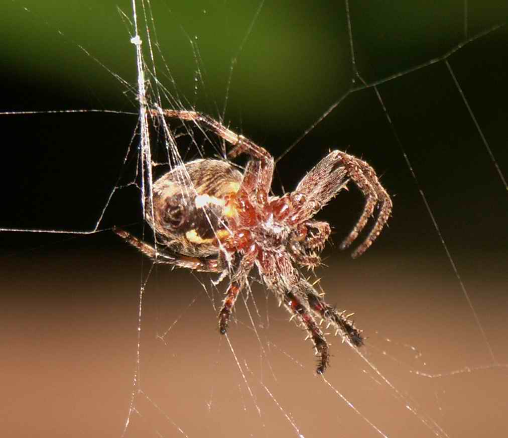 """photo """"spider's web"""" tags: macro and close-up,"""