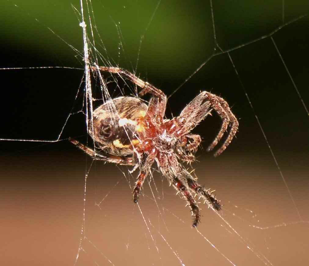 """фото """"spider's web"""" метки: макро и крупный план,"""