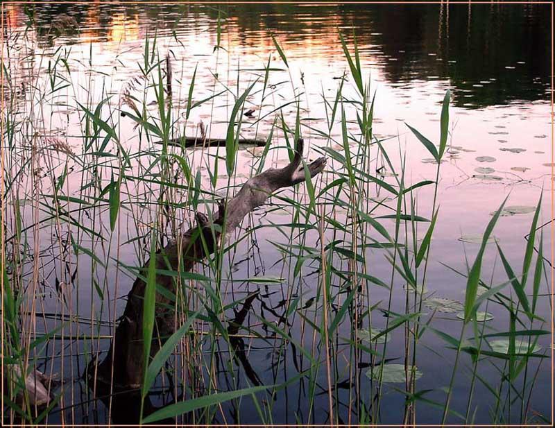 "фото ""Розовый закат на озере!"" метки: пейзаж, вода"