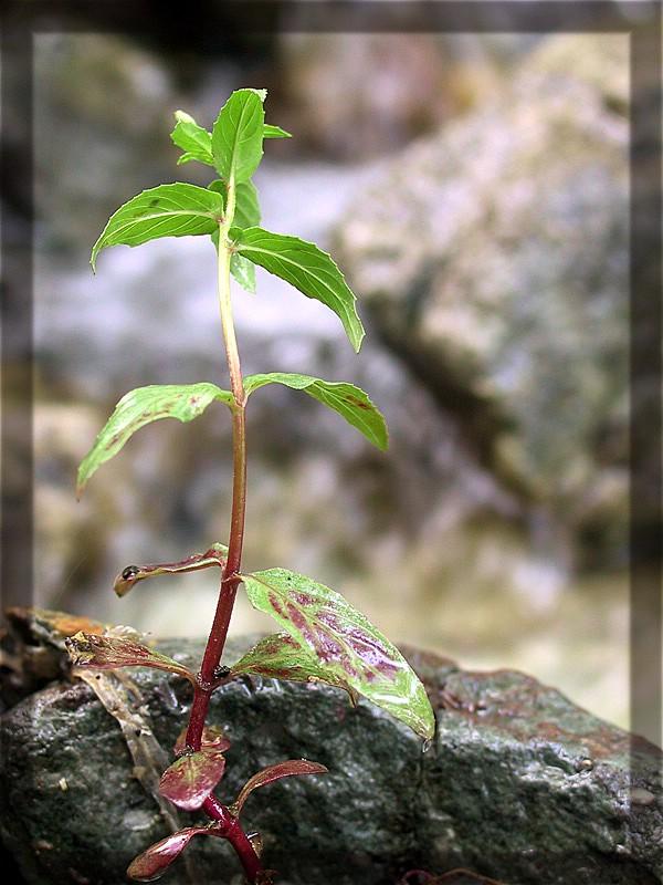"""фото """"4"""" метки: макро и крупный план, природа, цветы"""