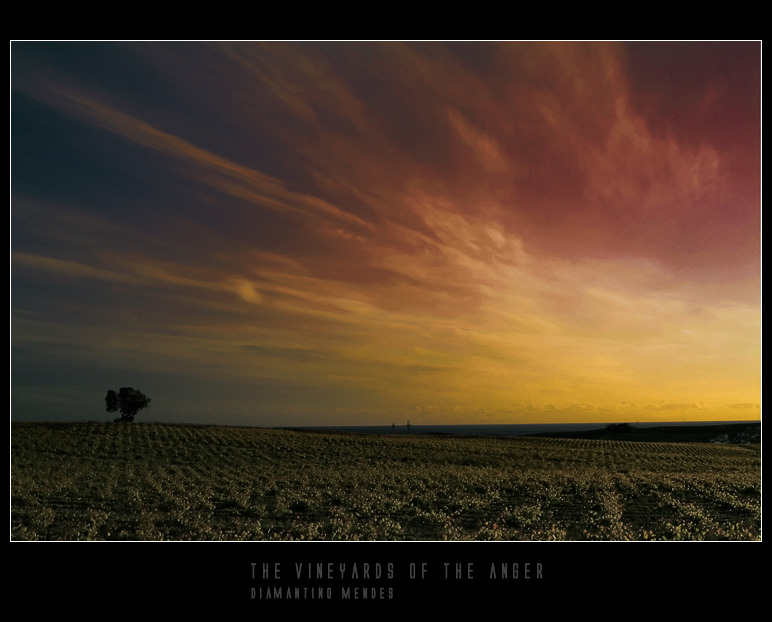 "photo ""The vineyards of the anger"" tags: landscape, nature,"