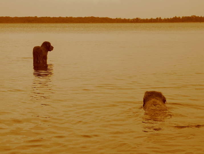 "photo ""two swimmers at sunset"" tags: nature, landscape, pets/farm animals, sunset"