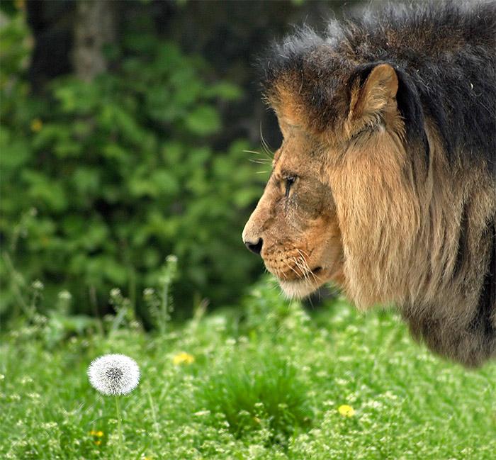 """фото """"романтик..."""" метки: природа, дикие животные"""