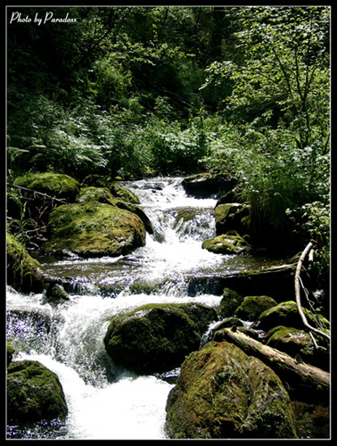 "photo ""Waterfall"" tags: landscape, forest, water"