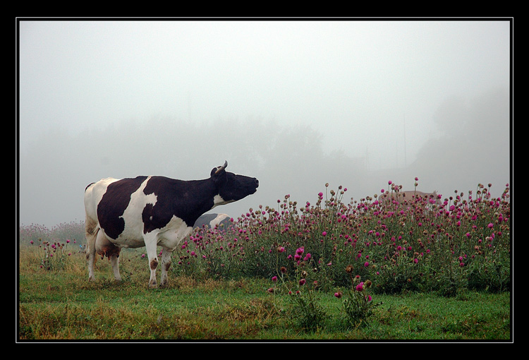 "photo ""Milk morning"" tags: misc., nature, pets/farm animals"