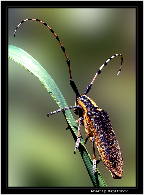 "photo ""Untitled photo"" tags: nature, macro and close-up, insect"