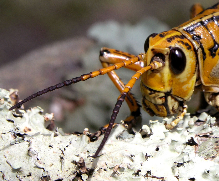 "photo ""Head and antennae"" tags: macro and close-up, nature, insect"
