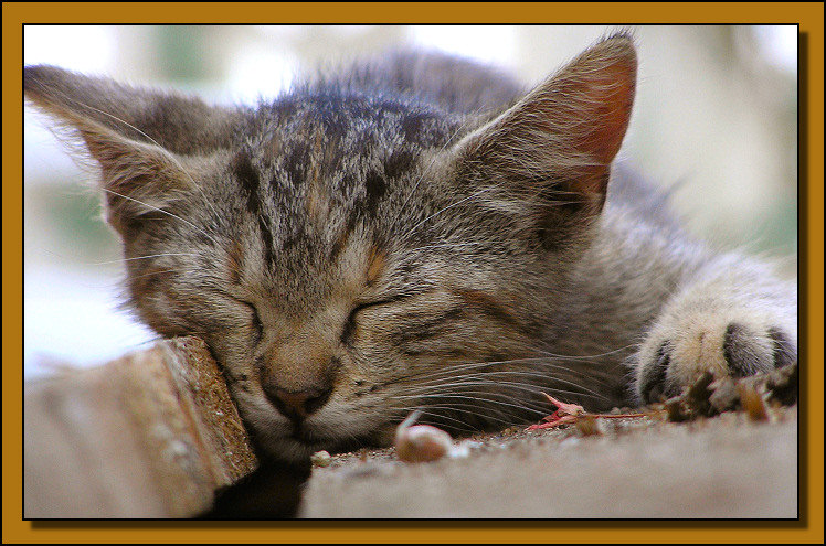 "photo ""Wake me up!"" tags: nature, portrait, pets/farm animals"