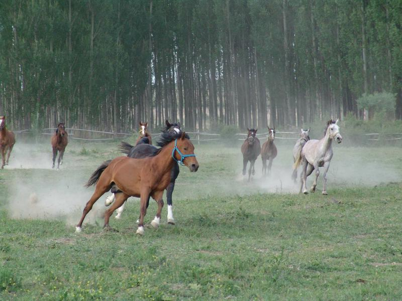 "photo ""Redhorses"" tags: sport, nature, wild animals"