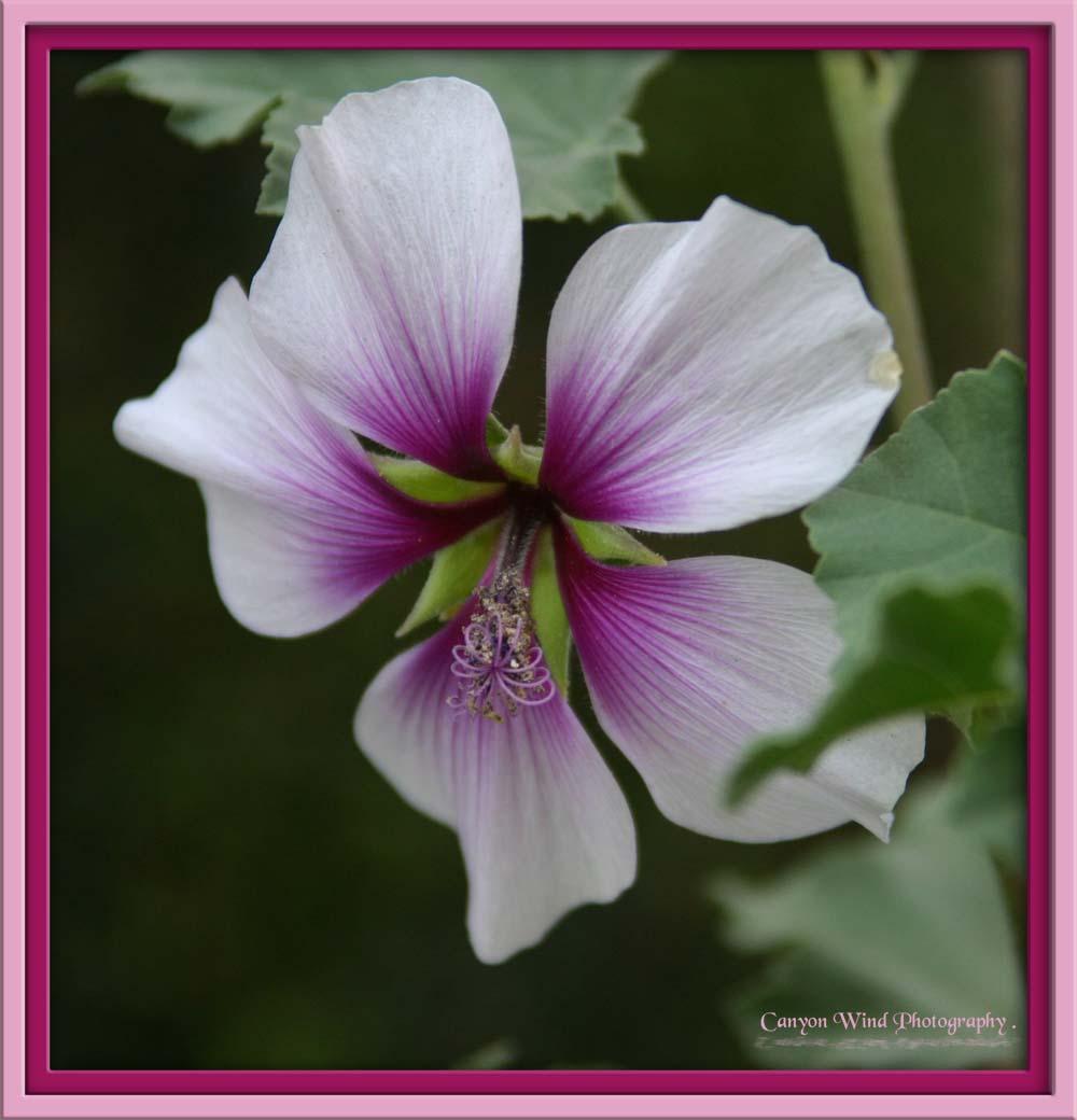 """фото """""""" Fleur De Jour """" ."""" метки: макро и крупный план, природа, цветы"""