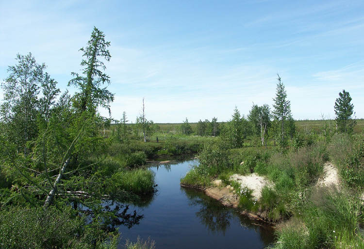 "photo ""Tundra stream"" tags: landscape, summer, water"