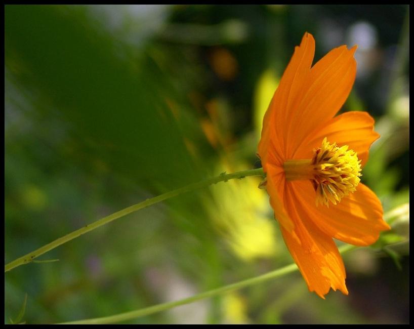 """фото """"Orange flying"""" метки: портрет,"""