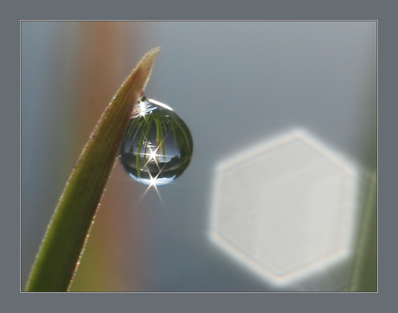 "photo ""Water drop view"" tags: macro and close-up, landscape, water"