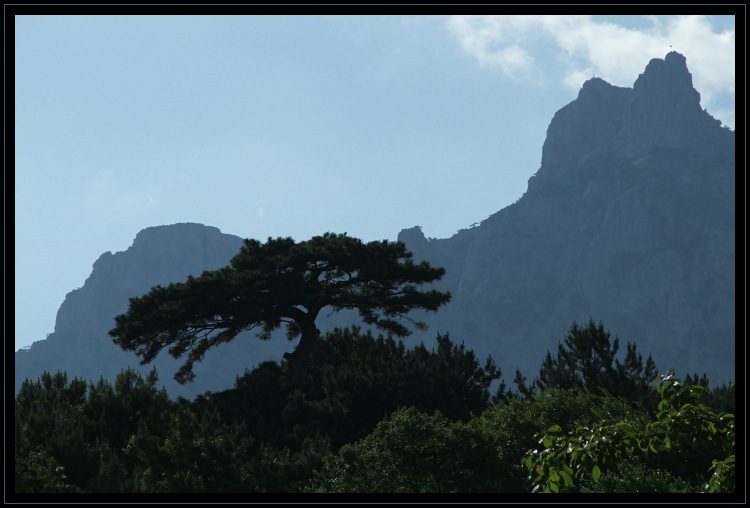"photo ""blue mountain and pine"" tags: landscape, mountains, summer"