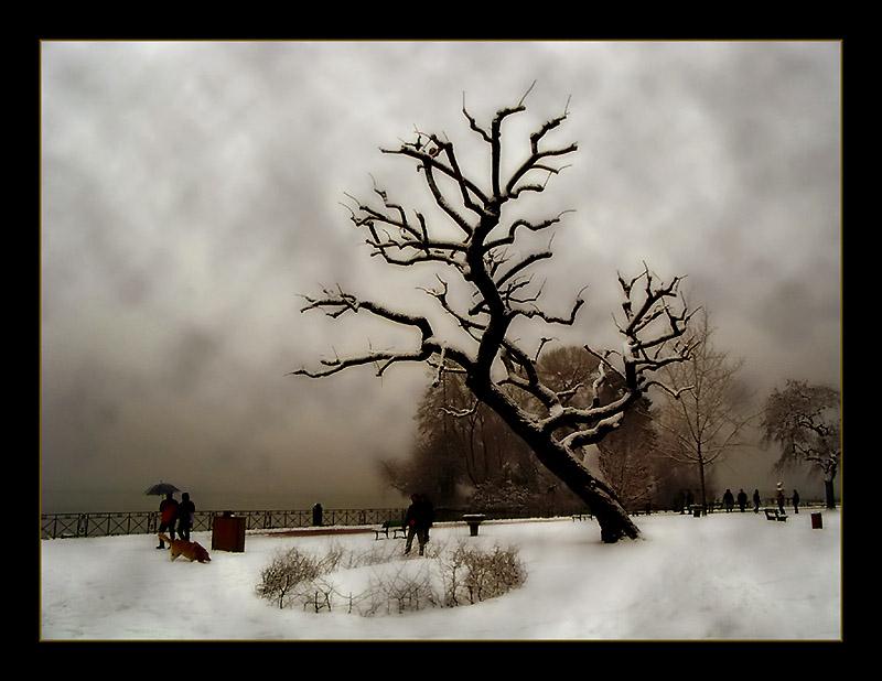 """фото """"Dead Tree"""" метки: пейзаж, природа, зима"""