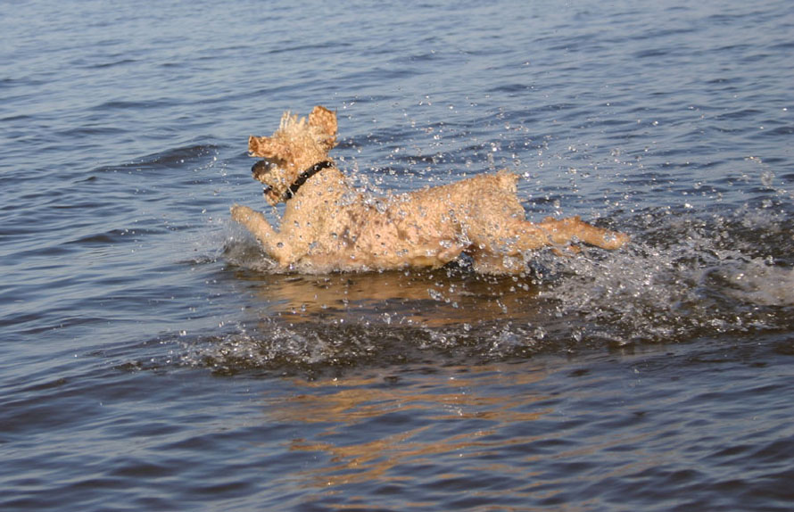 "photo ""Running on water"" tags: nature, pets/farm animals"