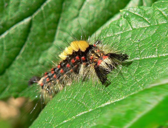 "photo ""caterpillar"" tags: nature, macro and close-up, insect"