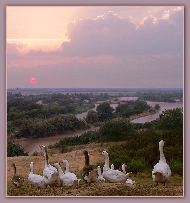 "photo ""***"" tags: nature, landscape, pets/farm animals, summer"
