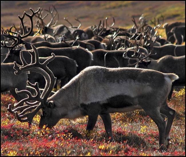 """фото """"The herd"""" метки: путешествия, Азия"""