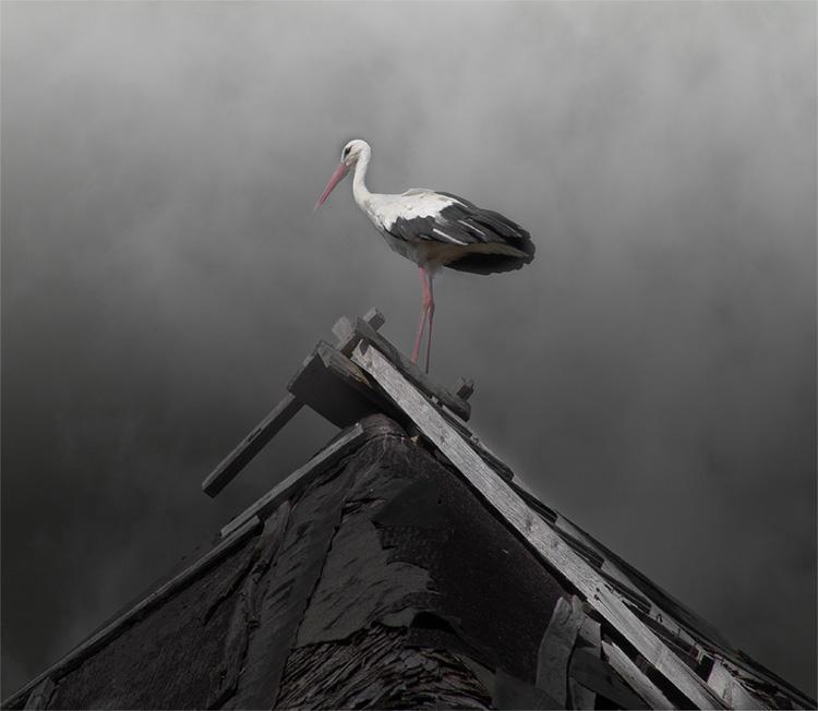 фото гиф аист на крыше