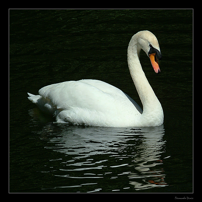 """photo """"Cool elegance"""" tags: nature, landscape, water, wild animals"""