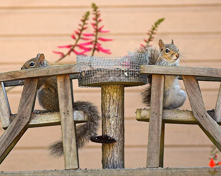 "photo ""Family Picnic"" tags: humor, nature, wild animals"