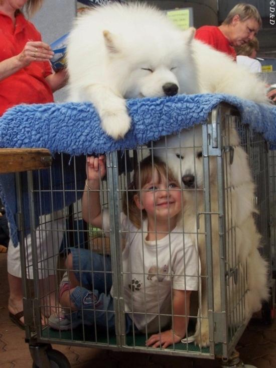 "фото ""Amy & Samoyed at the Pet Expo"" метки: юмор, портрет, дети"