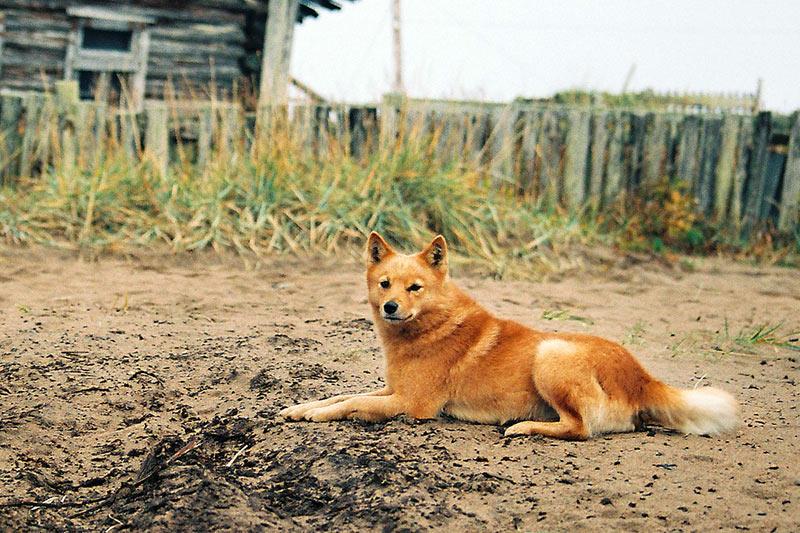 """фото """"Картинка с Кольского 2"""" метки: путешествия, природа, Европа, домашние животные"""