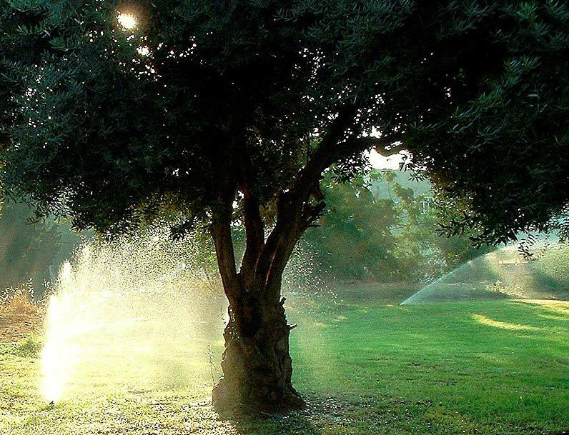 друзья деревья при поливе картинки всех оригинальными приятными