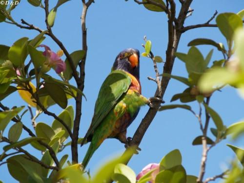 "фото ""parrot"" метки: природа, дикие животные"