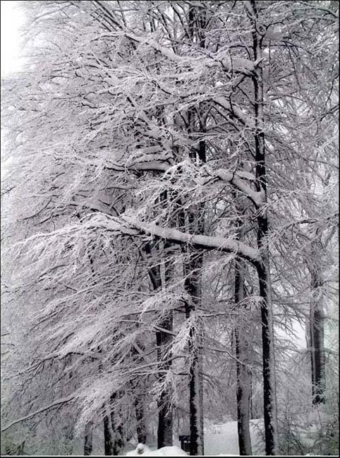 """фото """"Iarna in Gutin"""" метки: пейзаж, зима"""