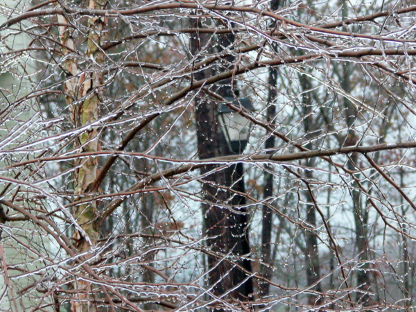 """photo """"Ice Storm"""" tags: nature, landscape, winter"""