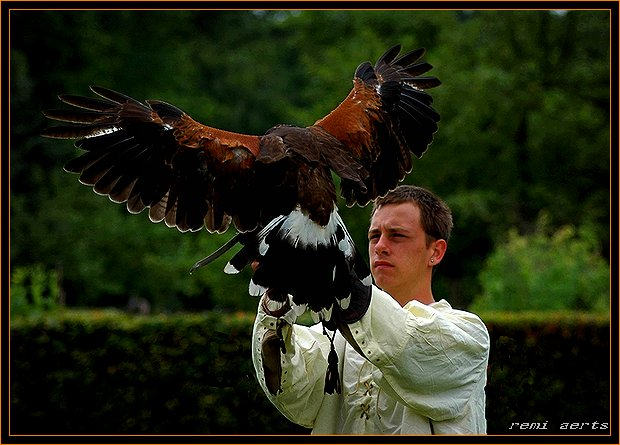 """фото """"young falconer"""" метки: портрет, природа, дикие животные, мужчина"""