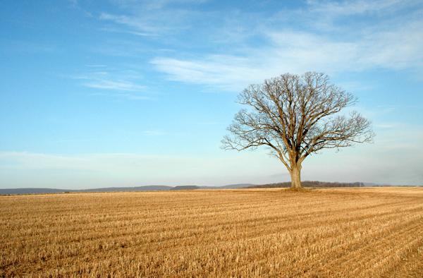 """фото """"Alone"""" метки: пейзаж,"""