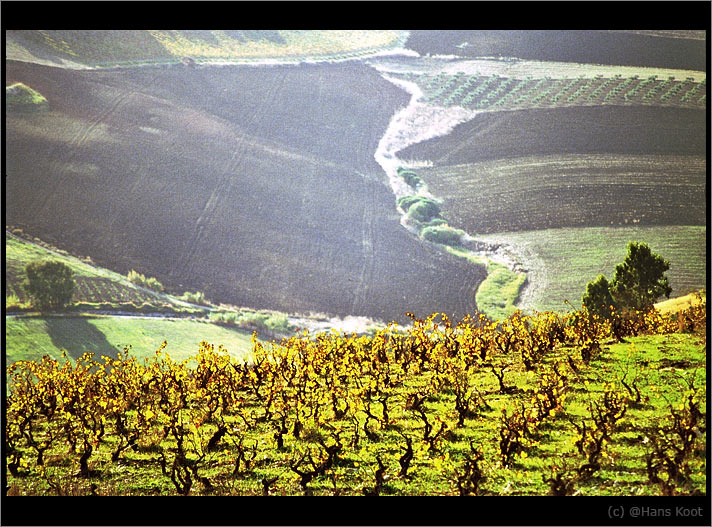"фото ""grapes and something distant"" метки: пейзаж, горы"