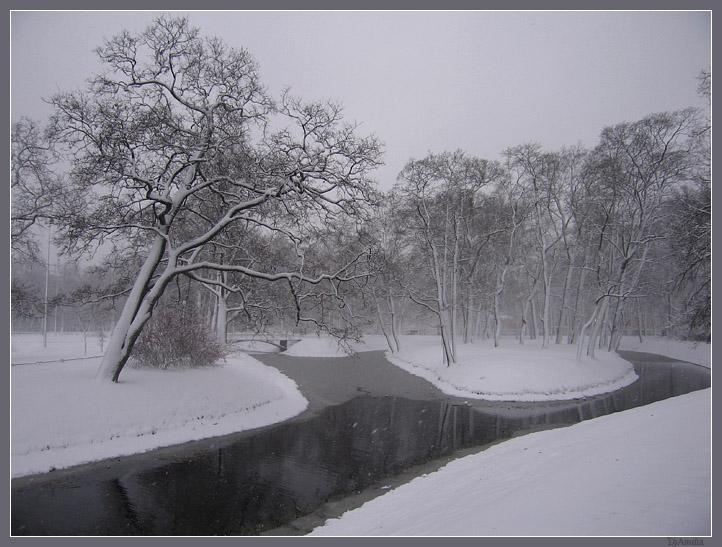 """фото """"В Таврическом саду - зима"""" метки: пейзаж, природа, зима"""