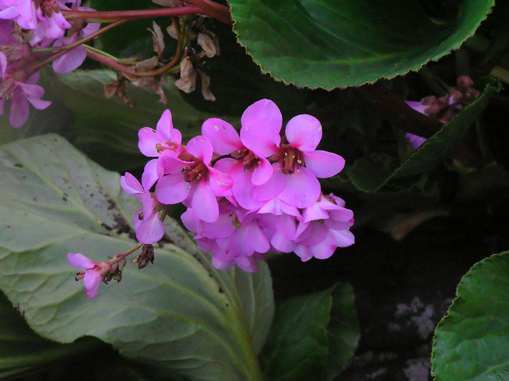 """фото """"Rosen Fragility"""" метки: природа, жанр, цветы"""