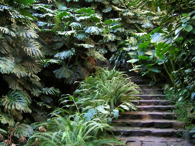 "фото ""The Hidden Path"" метки: природа, жанр, цветы"