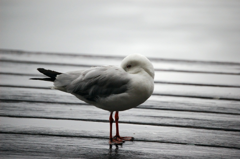 """фото """"Do Not Disturb"""" метки: природа, дикие животные"""
