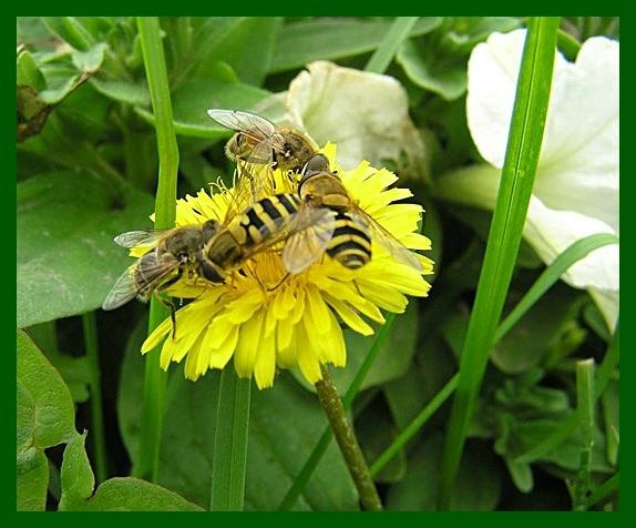 """фото """"Летний ресторан"""" метки: макро и крупный план, природа, насекомое"""
